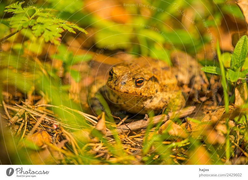 toad Nature Animal Wild animal Frog 1 Observe Sit Common toad Amphibian Brown Close-up Macro (Extreme close-up) fauna Poland Colour photo Deserted