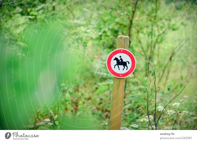 No riding! Nature Summer Park Forest Means of transport Horse-drawn carriage 1 Animal Sign Signs and labeling Bans Green Red Prohibition sign Ride