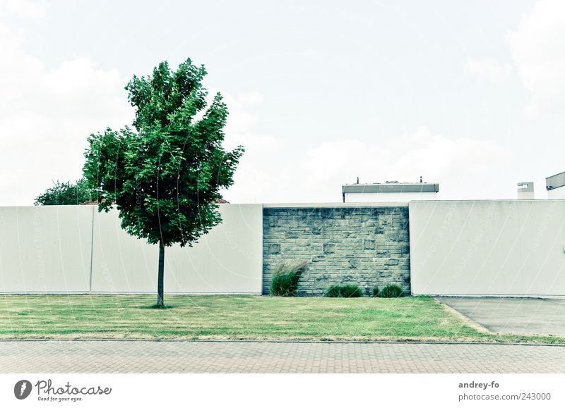 Minimalist. Meadow Manmade structures Architecture Wall (barrier) Wall (building) Street Stone Modern Clean Green Contentment Tree Lawn Pedestrian precinct Sky
