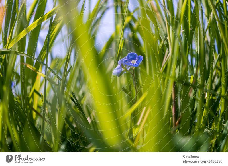 Sky Nature Summer Blue Plant Beautiful Flower Leaf Environment Blossom Meadow Grass Gray Moody Growth Happiness
