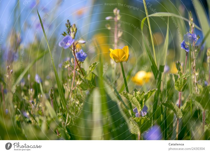 Sky Nature Summer Blue Plant Beautiful Green Leaf Yellow Environment Blossom Grass Together Moody Growth Happiness
