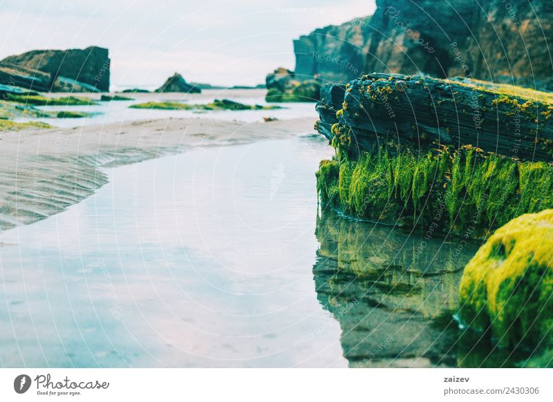 puddle with reflection of stones with green seaweed on the beach Exotic Vacation & Travel Tourism Ocean Waves Nature Landscape Sand Climate Moss Rock Coast