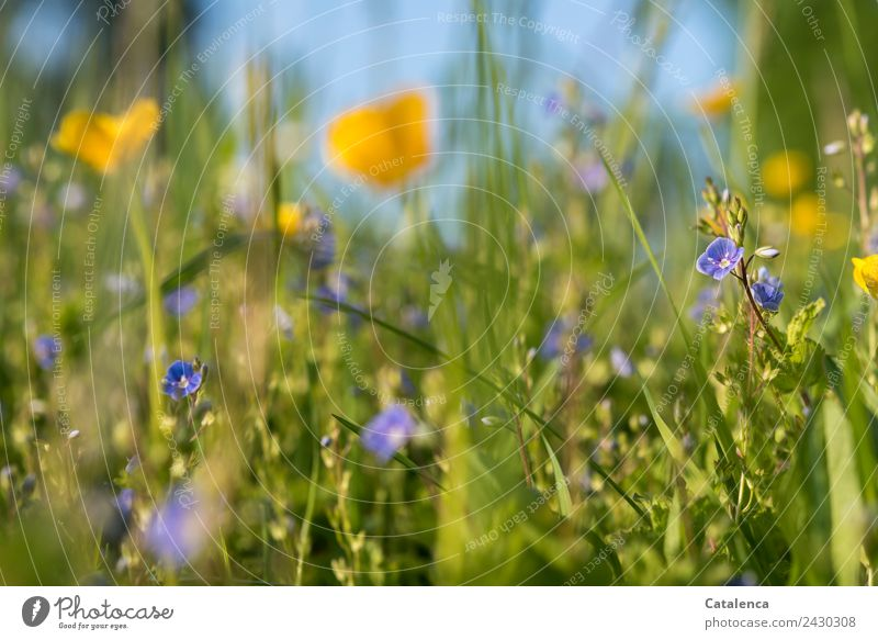 Sky Nature Summer Blue Plant Beautiful Green Flower Leaf Joy Yellow Environment Blossom Meadow Grass Together
