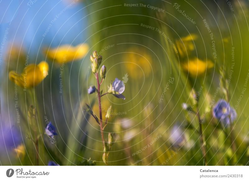 Sky Nature Summer Plant Blue Beautiful Green Flower Leaf Yellow Environment Blossom Meadow Grass Brown Design