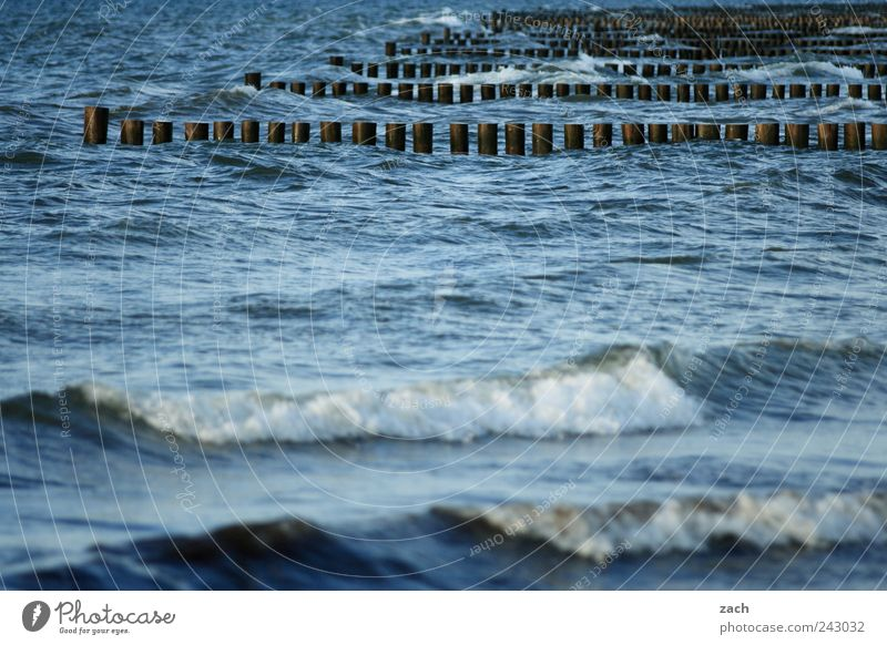 Baltic Swimming & Bathing Nature Water Wind Waves Coast Bay North Sea Baltic Sea Wood Wet Blue Break water White crest Colour photo Exterior shot Deserted