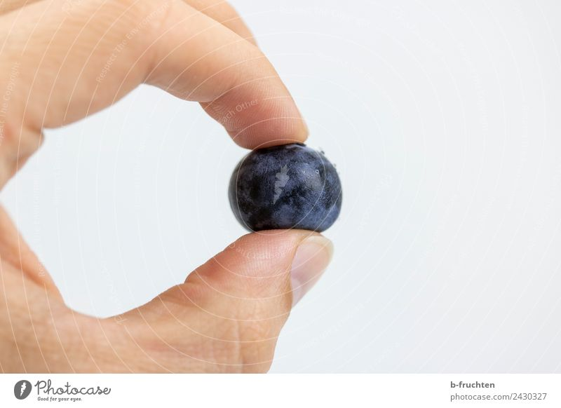 cultivated blueberry Fruit Organic produce Man Adults Hand Fingers Touch To hold on Blue Violet Blueberry Individual Vitamin Healthy Eating Fruity Fresh Pick