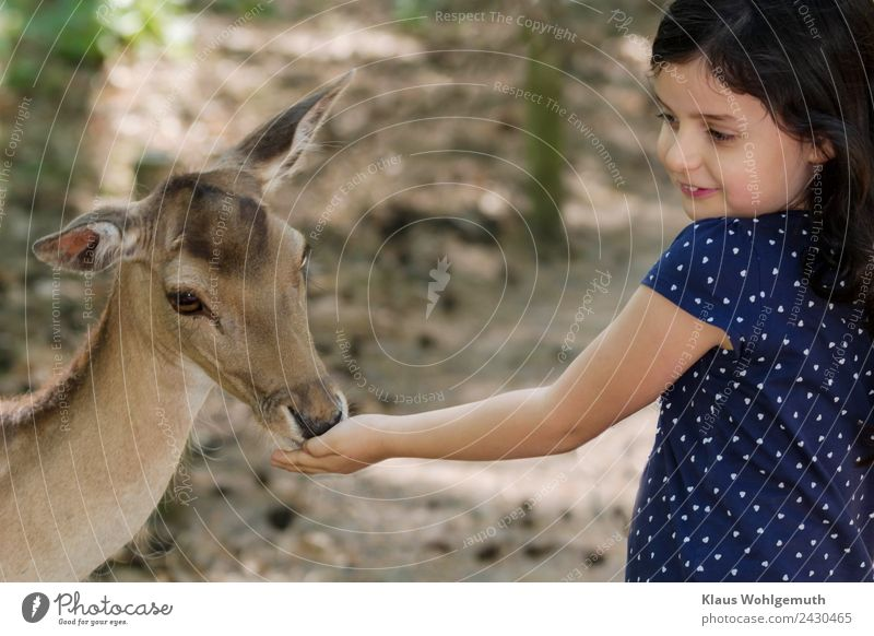Child joy. Girl feeds a fallow deer Picnic Joy Hair and hairstyles Skin Face Infancy Head Arm Hand 1 Human being 3 - 8 years Zoo Spring Summer Clothing Dress