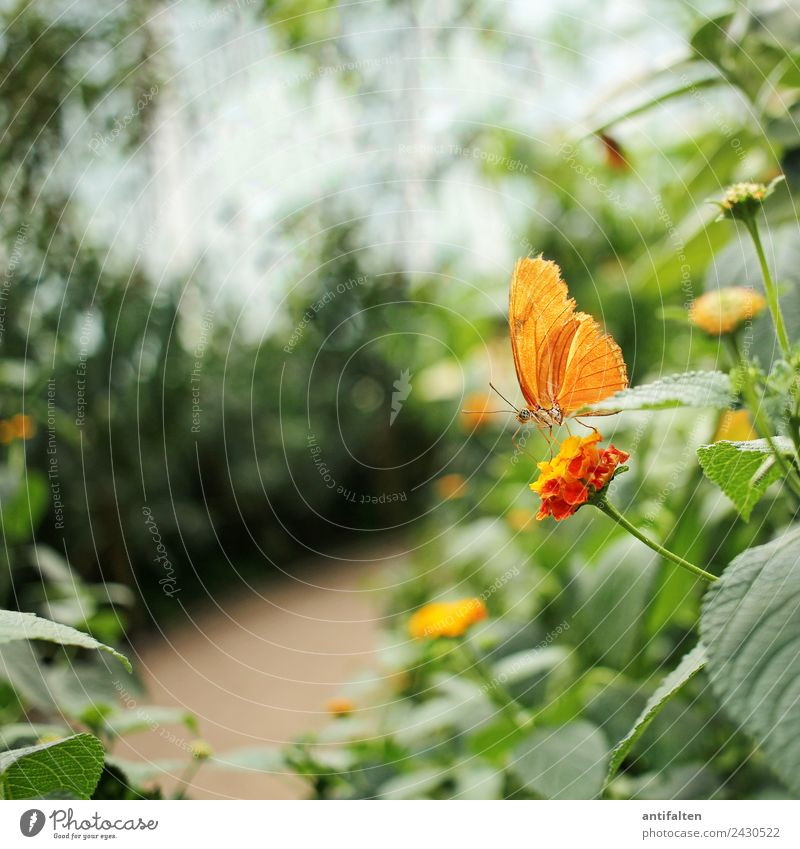 for inkje: just a little orange butterfly :-) Leisure and hobbies Vacation & Travel Tourism Trip Freedom Summer Nature Plant Spring Beautiful weather Tree