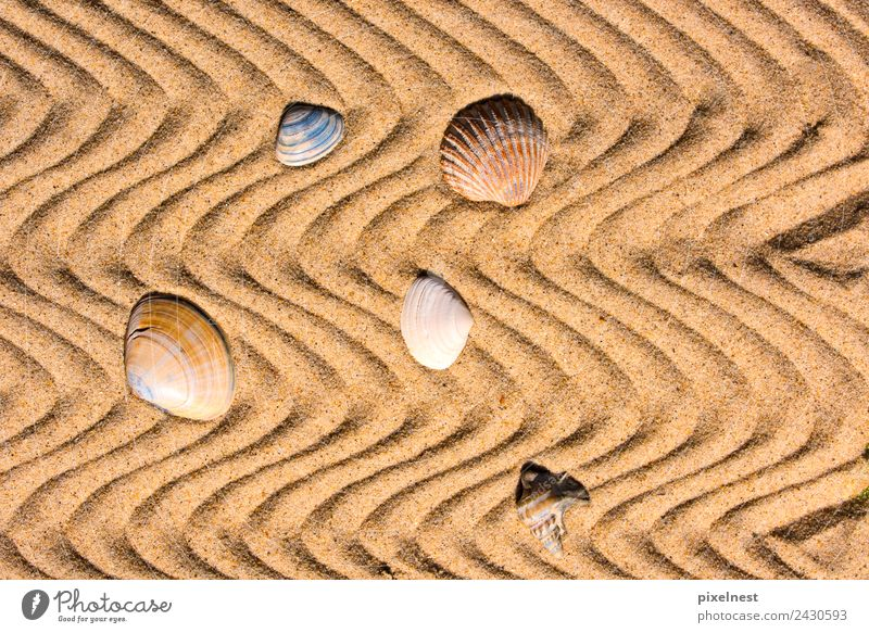 Shells in the Sand Joy Vacation & Travel Summer Summer vacation Beach Waves Warmth Mussel Stripe Maritime Warm-heartedness Calm Relaxation Leisure and hobbies