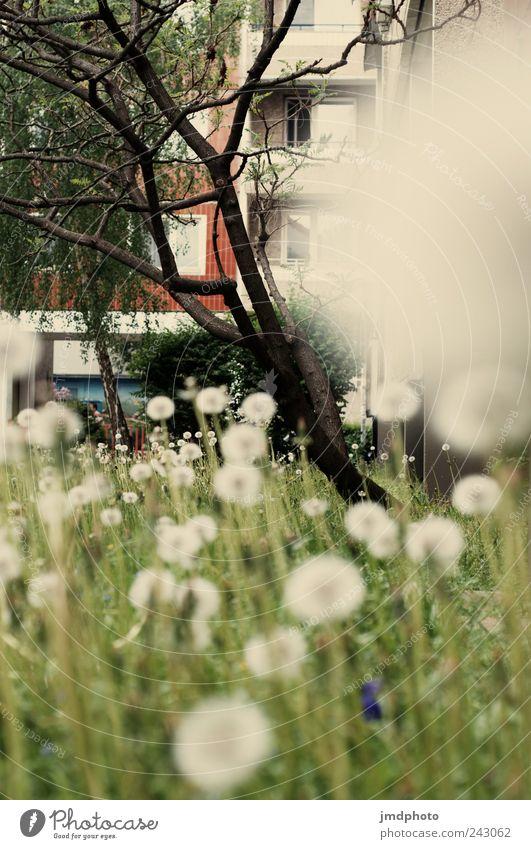 Nature Tree Flower Plant Joy Meadow Blossom Grass Garden Happy Park Landscape Contentment Environment Happiness Esthetic