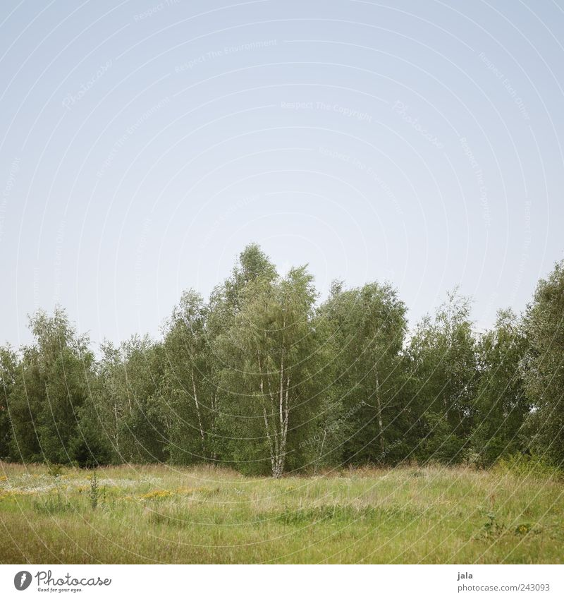 Nature Sky Tree Green Blue Plant Forest Meadow Grass Landscape Natural Foliage plant Birch tree Cloudless sky Wild plant