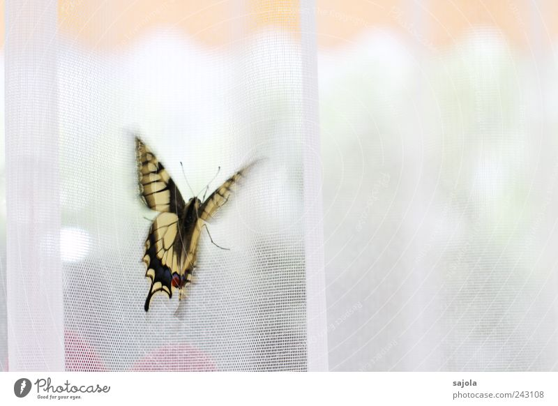 shortly before takeoff Animal Butterfly Swallowtail 1 Esthetic Judder Beginning Vacation & Travel Departure Sun blind Drape Curtain Colour photo Interior shot