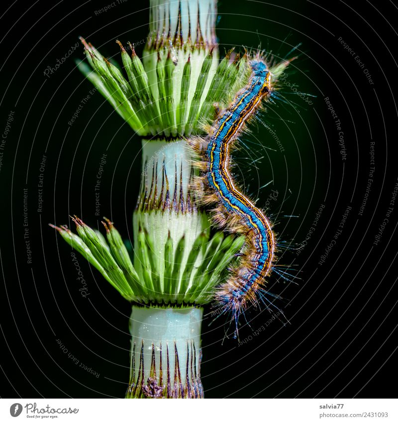 Hair and spines Environment Nature Plant Fern Leaf Horsetail Animal Caterpillar Larva Insect 1 Esthetic Exceptional Point Soft Bizarre Design Art Symmetry