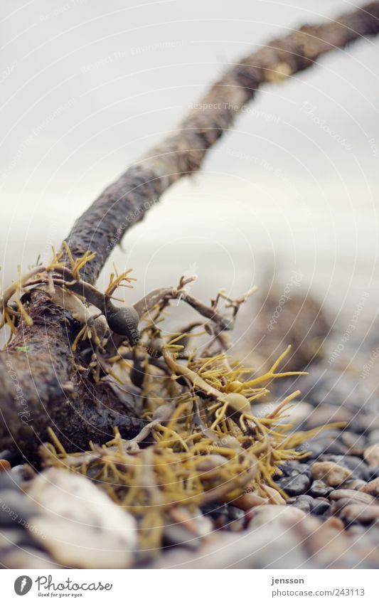 Nature Plant Beach Wood Stone Environment Wet Natural Algae Flotsam and jetsam