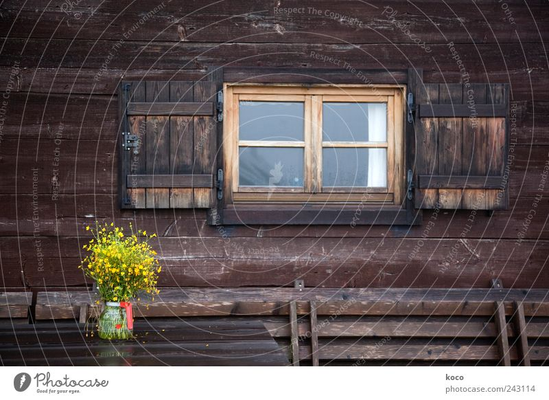Old Flower Summer Vacation & Travel Yellow Cold Wall (building) Window Mountain Wood Wall (barrier) Contentment Brown Hiking Glass Wet