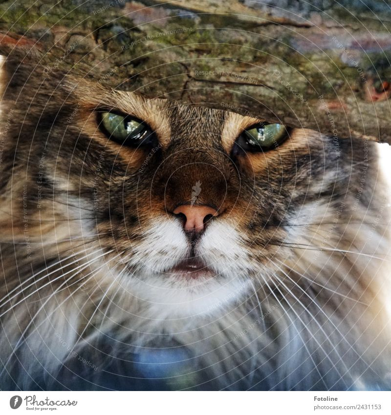 instant Environment Nature Plant Animal Tree Pet Cat Animal face Pelt 1 Bright Near Natural Beautiful Soft Brown Green White Snapshot Domestic cat Whisker Snout