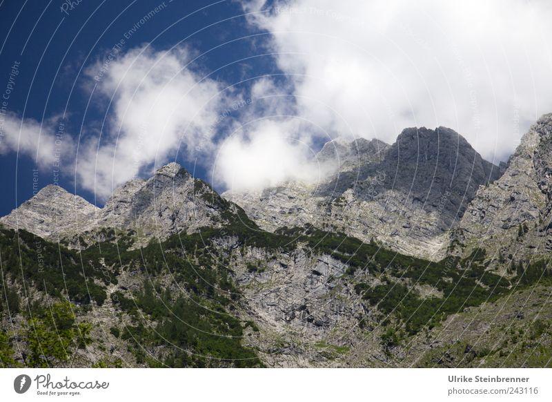 Chasing for its summit ... Nature Landscape Plant Sky Clouds Summer Beautiful weather Tree Bushes Forest Rock Alps Mountain Watzmann Berchtesgaden Bavaria Peak