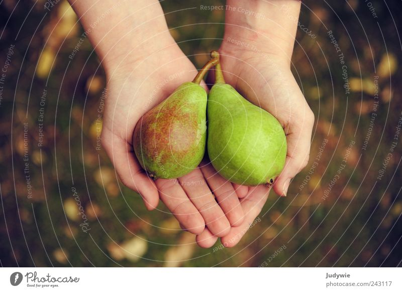 Under the pear tree Food Fruit Nutrition Organic produce Vegetarian diet Diet Luxury Happy Healthy Life Harmonious Hand Environment Nature Summer Autumn