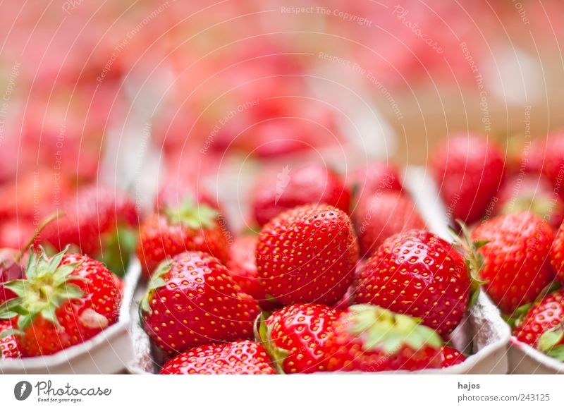 strawberries Fruit Dessert Summer Agriculture Forestry Illuminate Delicious Juicy Many Red Strawberry Sweet Eating Domestic Markets Offer seasonal regionally