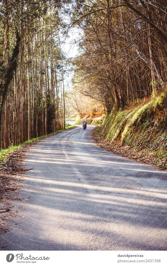 Forest road landscape with couple riding motorbike Nature Vacation & Travel Old Green Landscape Tree Street Adults Lifestyle Autumn Natural Tourism Freedom