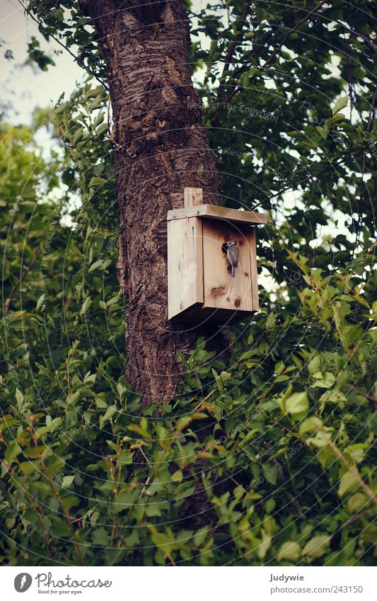 Home Environment Nature Spring Summer Plant Tree Bushes Leaf Animal Wild animal Bird Tit mouse Natural Green Safety Protection Safety (feeling of)