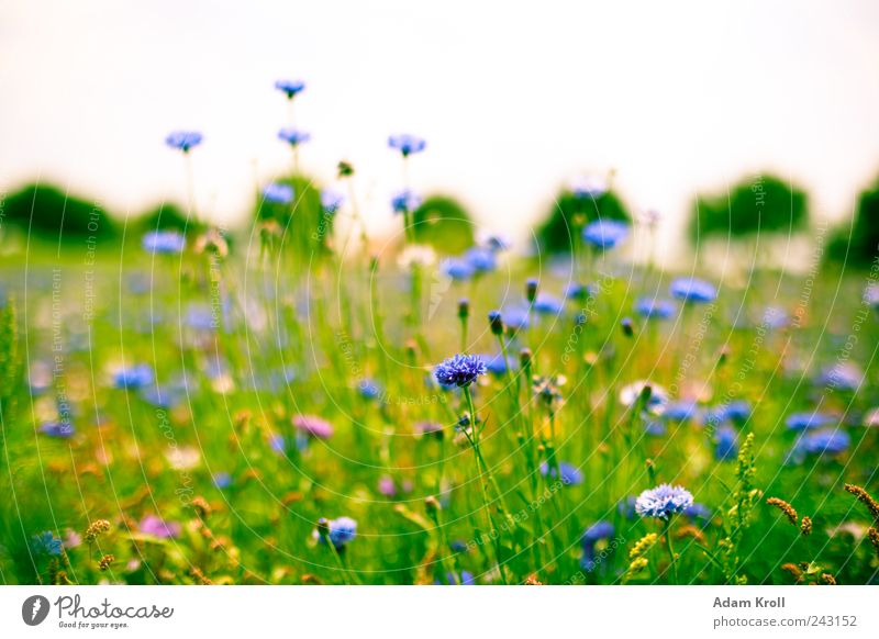 Nature Flower Plant Summer Calm Colour Relaxation Meadow Blossom Grass Freedom Happy Horizon Fresh Hope