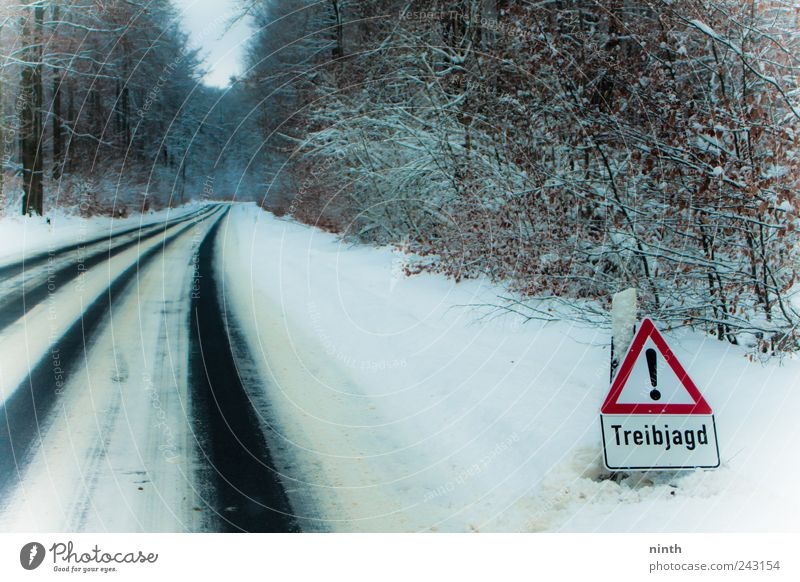 drift hunting without wild Leisure and hobbies Hunting Winter Snow Winter vacation Landscape Fog Ice Frost Plant Forest Transport Traffic infrastructure Street