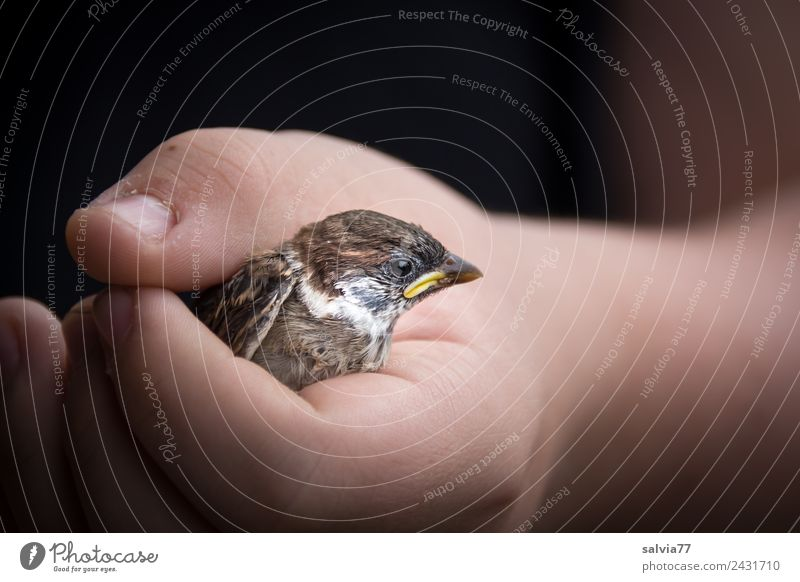 Better the sparrow in the hand... Skin Arm Hand Nature Animal Bird Animal face Sparrow Passerine bird 1 To hold on Brown Black Love of animals Responsibility