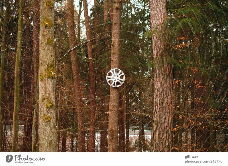 Thinking of Karsten Nature Tree Forest Motoring Sign Round Brown Calm Bizarre Discover car rim Tree trunk Colour photo Exterior shot Day