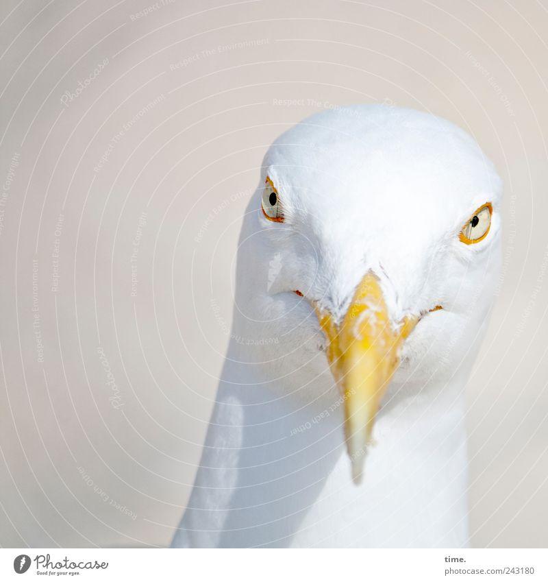 White Eyes Animal Head Bird Esthetic Feather Animal face Observe Curiosity Grinning Bizarre Seagull Beak Pride Smart