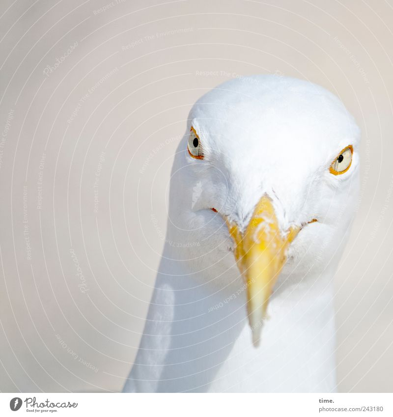Whitewine With The Fish? Animal Bird Animal face 1 Observe Looking Esthetic Curiosity Smart Bizarre Pride Seagull Head Beak Eyes Feather Grinning Colour photo