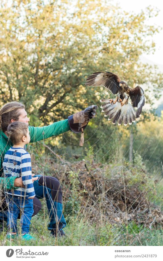 Man teaches boy the art of falconry with a hawk Eating Hunting Sports Child Baby Boy (child) Adults Nature Animal Leather Blonde Bird Wing Flying Feeding Wild