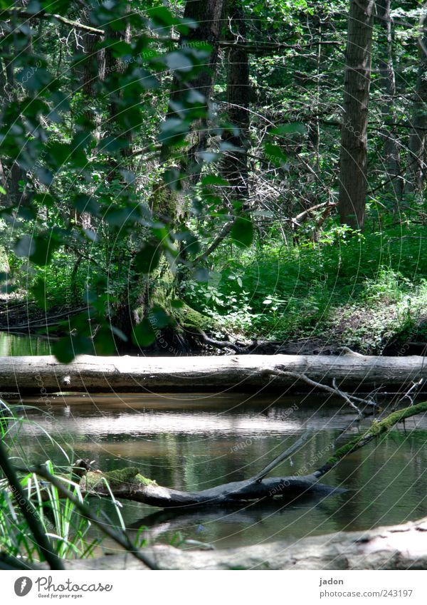Nature Water Tree Plant Calm Landscape Hiking Environment Trip Tourism Agriculture Virgin forest Lakeside Beautiful weather Brook Pond