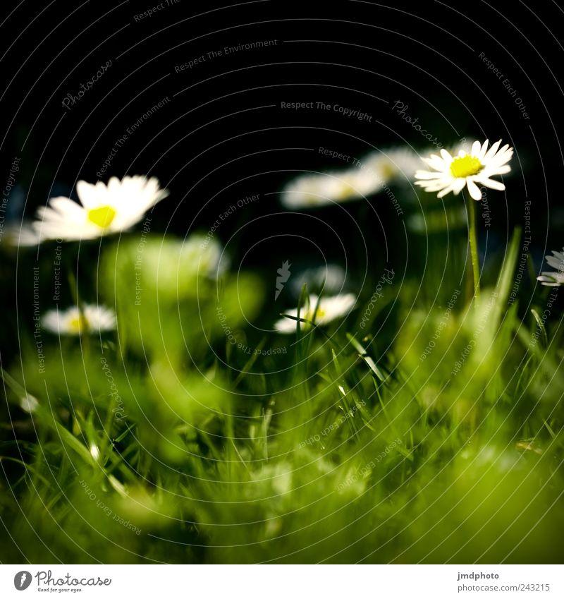 Nature Plant Joy Calm Meadow Blossom Grass Garden Happy Park Landscape Contentment Environment Fresh Happiness Growth