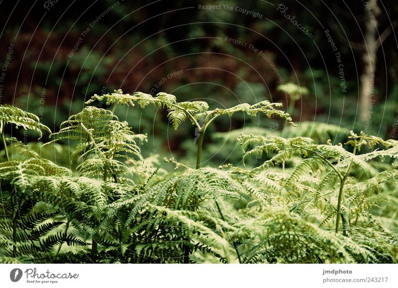 fern Trip Hiking Environment Nature Landscape Plant Bushes Foliage plant Garden Park Meadow Forest Blossoming Growth Free Fresh Natural Green Contentment