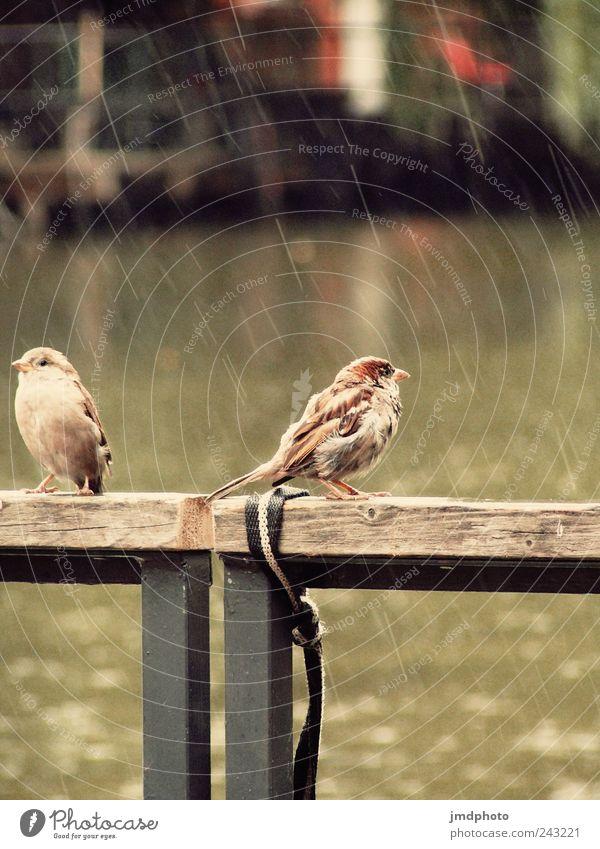 Nature Animal Calm Relaxation Environment Garden Lake Park Rain Bird Sit Flying Wet Natural Bridge Break