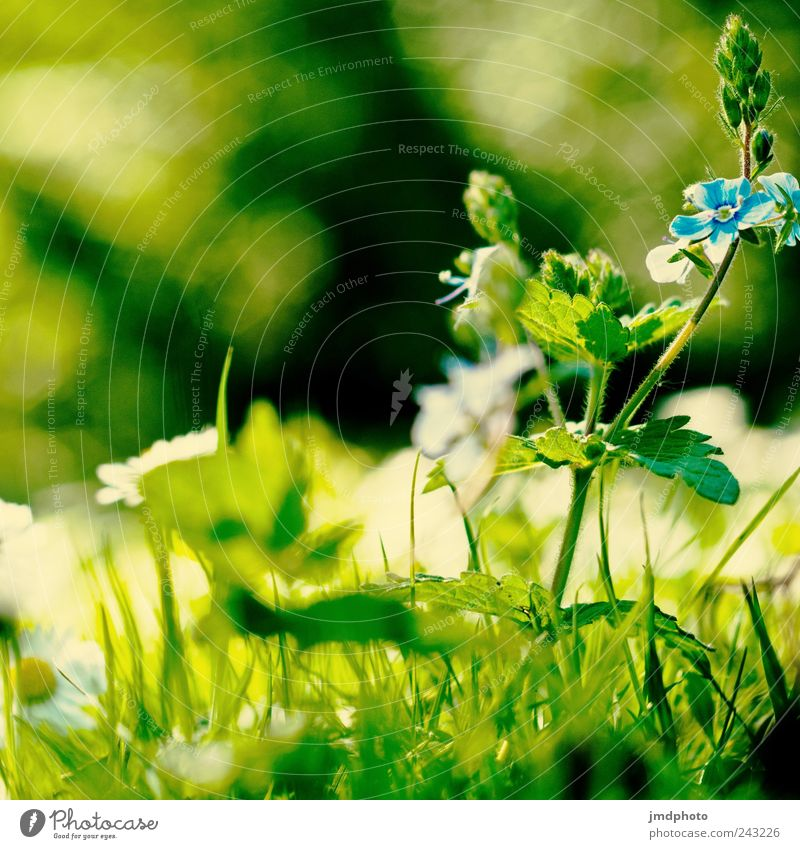 Nature Plant Summer Flower Leaf Environment Landscape Meadow Grass Blossom Garden Park Field Wild Free Fresh