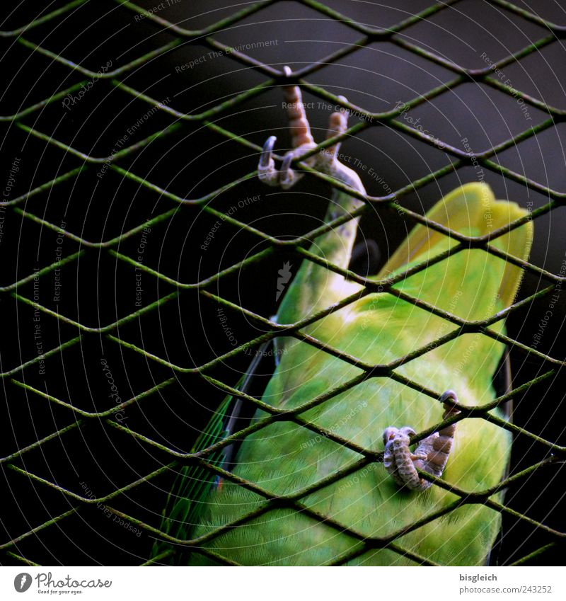 Kuala Lumpur Bird Park V Wing Claw Parrots Feather 1 Animal Green Climbing Going Mesh grid Grating Colour photo Exterior shot