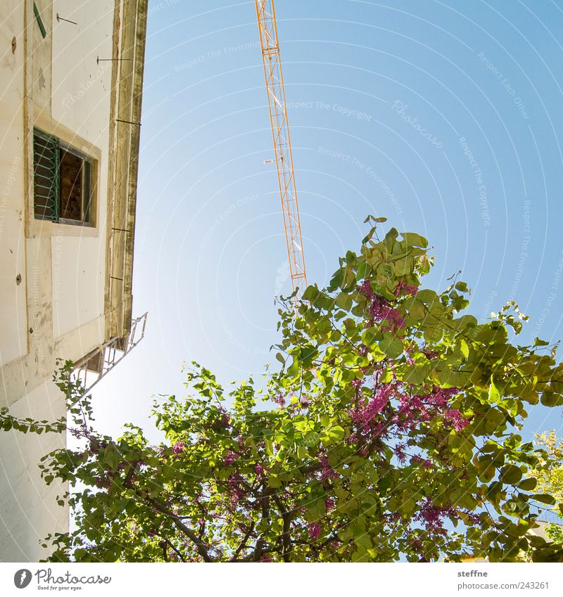 Tree House (Residential Structure) Wall (building) Wall (barrier) Spring Facade Blossoming Historic Beautiful weather Crane Portugal Mediterranean Old town Sky