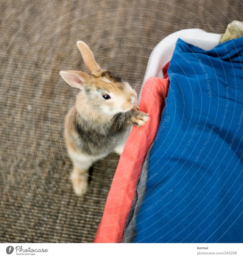 Animal Eyes Small Baby animal Flat (apartment) Stand Living or residing Cute Ear Curiosity Animal face Pelt Discover Hare & Rabbit & Bunny Brash Paw