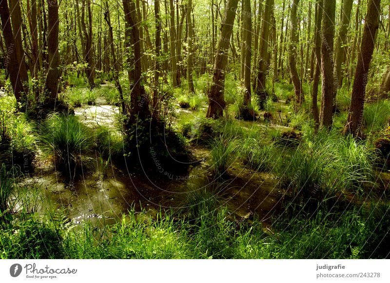 Nature Tree Green Plant Grass Landscape Moody Environment Wet Growth Wild Natural Virgin forest Darss Bog