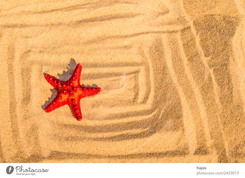 Starfish on the beach with pattern Vacation & Travel Summer Beach Sand 1 Animal Red muste vacation holidays Copy Space Tourism Colour photo Exterior shot