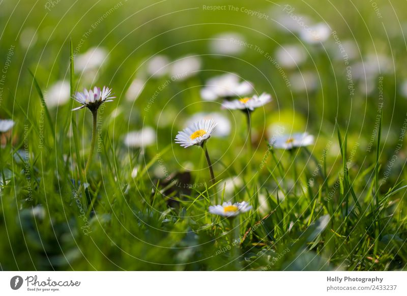 Nature Summer Plant Beautiful Green White Flower Life Yellow Healthy Environment Spring Blossom Meadow Grass Happy