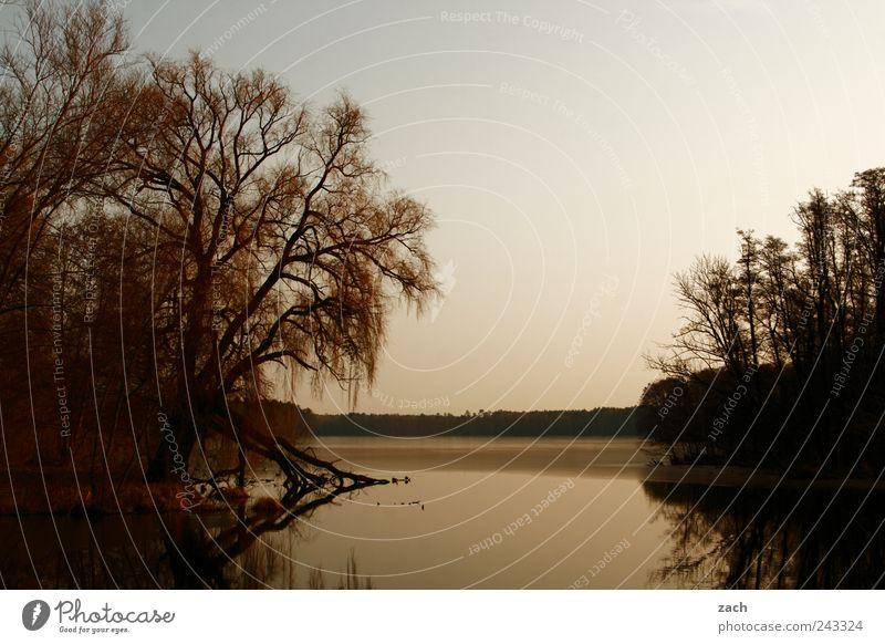 Nature Water Tree Calm Loneliness Animal Dark Relaxation Autumn Grass Lake Bird Coast Waves Idyll Lakeside