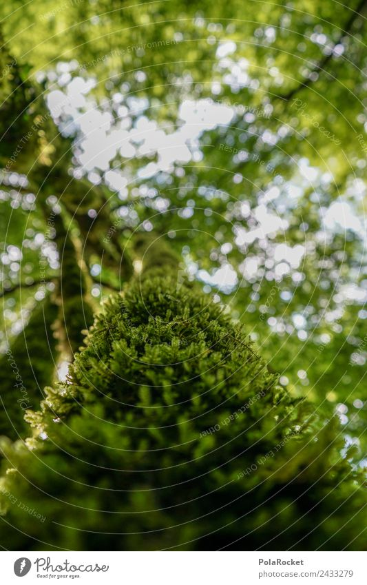#S totally mossed! Nature Uniqueness Treetop Leaf Moss Green Sustainability Slovenia Leaf canopy Detail Nature reserve Natural phenomenon Soft Forest Light