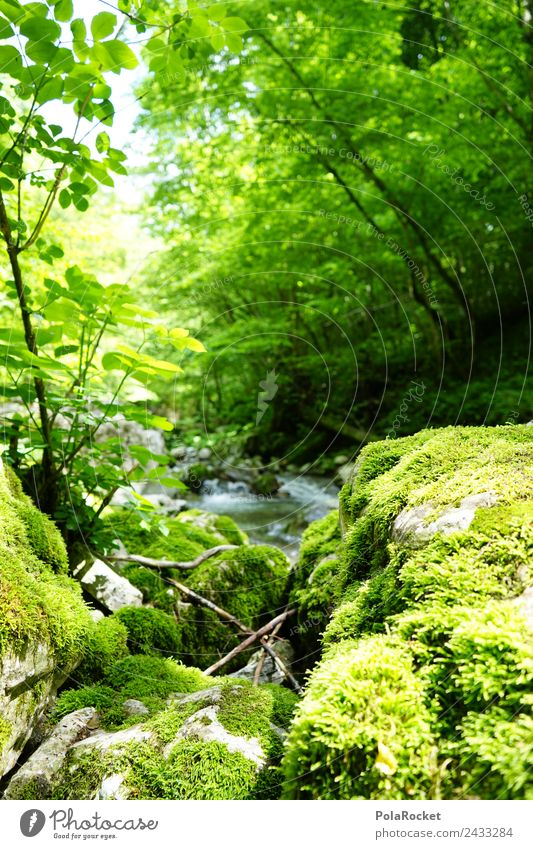 Nature Green Water Relaxation Environment Natural Stone Growth Fresh Wet River Moss Brook Nature reserve Natural phenomenon Primordial
