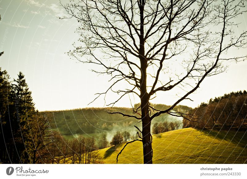 Nature Beautiful Calm Far-off places Forest Meadow Landscape Environment Infinity Idyll Hill Beautiful weather