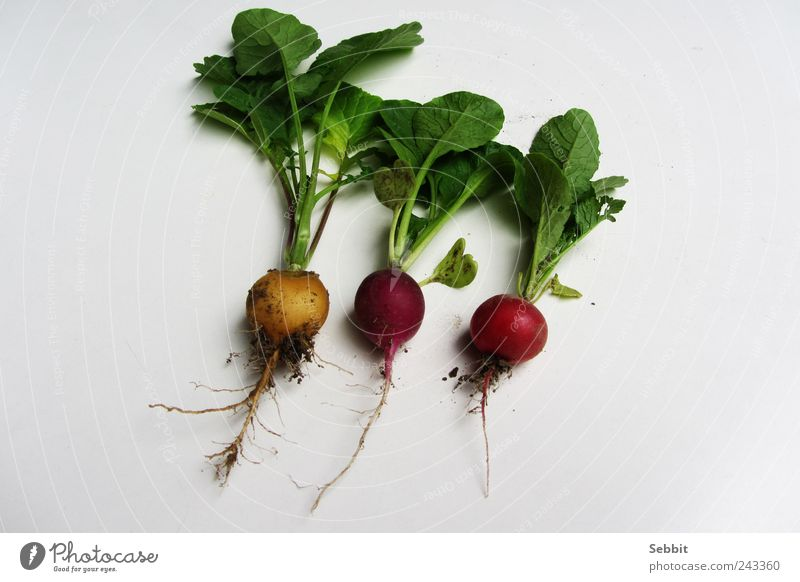 radish Food Vegetable Nature Plant Earth Summer Leaf Agricultural crop Garden Field Diet Select To enjoy Dirty Fresh Healthy Round Juicy Yellow Green Violet Red