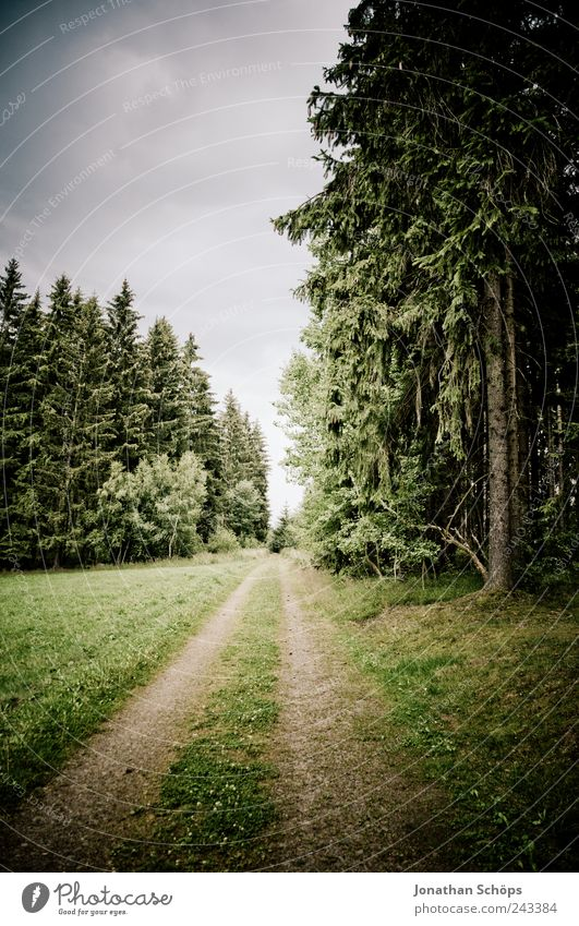 follow the forest path Environment Nature Landscape Sky Climate Weather Bad weather Tree Forest Green Lanes & trails Target Walking Loneliness Grass