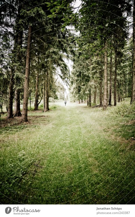Human being Nature Green Forest Environment Meadow Landscape Emotions Grass Lanes & trails Moody Brown Fear Walking Hiking Esthetic
